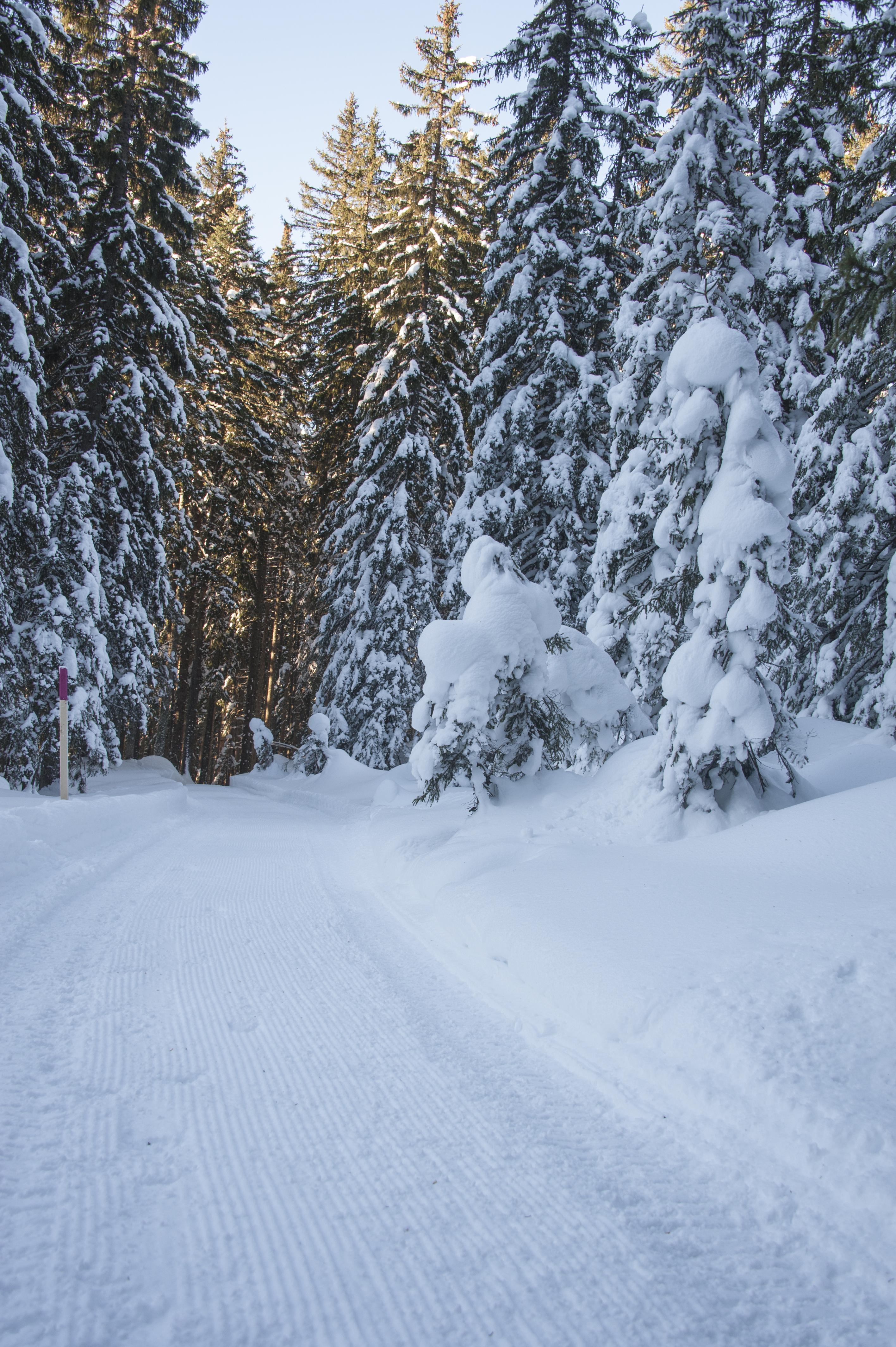 Winterwanderweg_RodelnLuisa_Winterbilder_Tropfen_Bäume_0010_1.jpg
