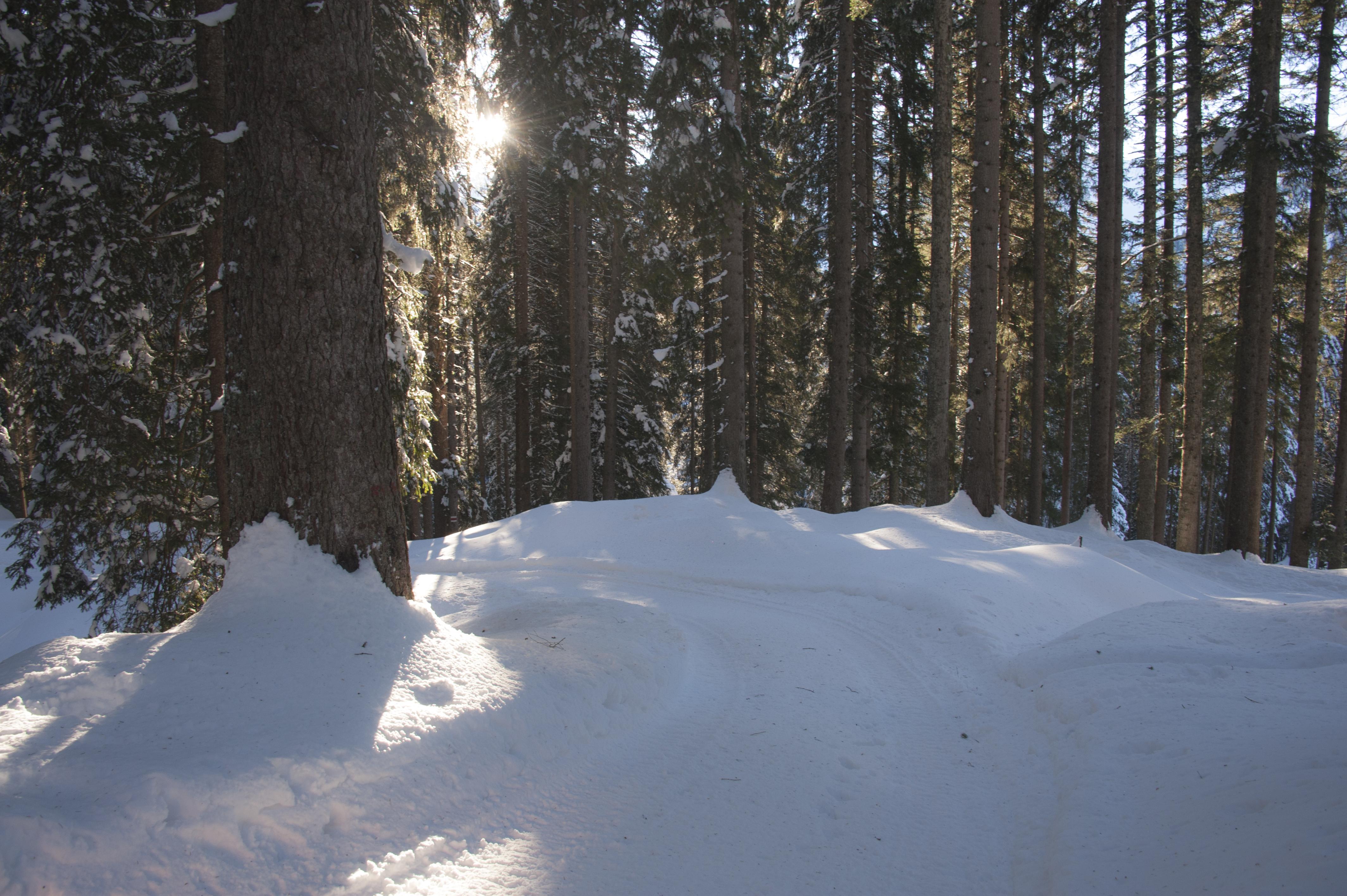 Winterwanderweg_RodelnLuisa_Winterbilder_Tropfen_Bäume_0281_1.jpg